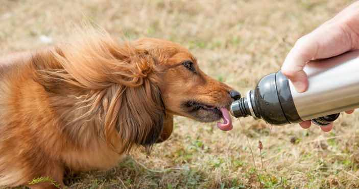 Dog Drinking Flask