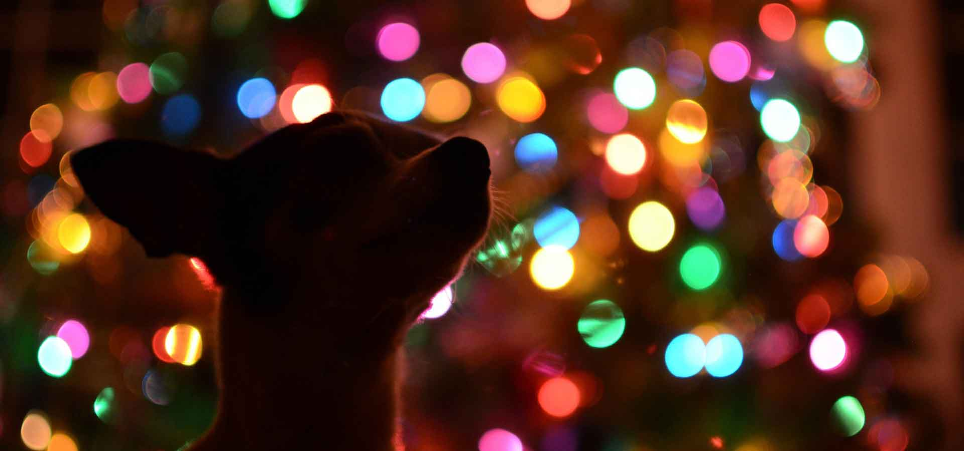 Looking after your dog this Christmas
