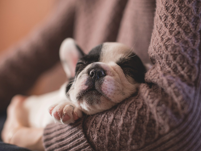 5 Things You Need To Know When Buying Your First Puppy