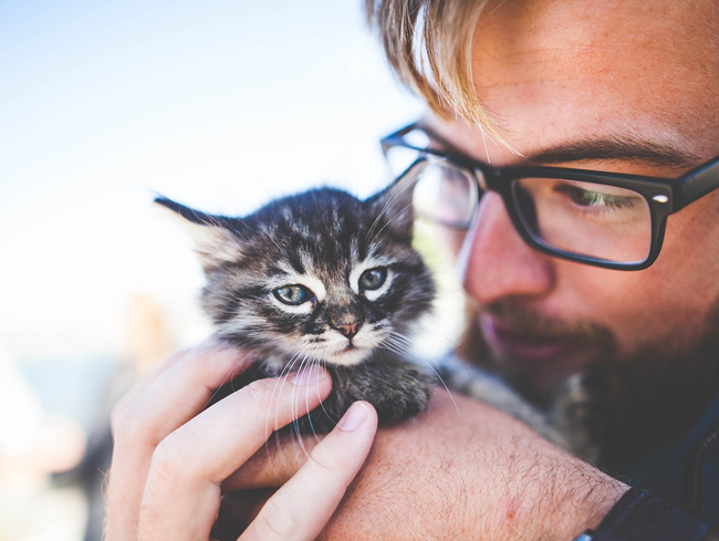 Owning your own cat or kitten