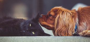 Dog sniffing a cat