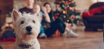 Ten Top Gifts For Pets This Christmas