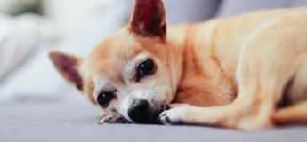 Ways to care for a senior dog