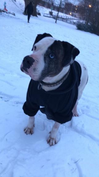 Dog Rescue Centres Oxfordshire