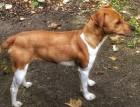 Plummer Terrier