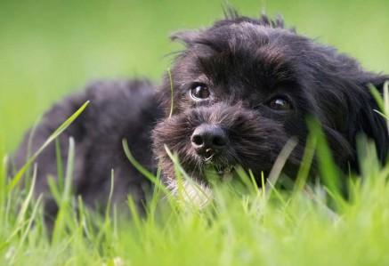 dog-eating-grass.jpg