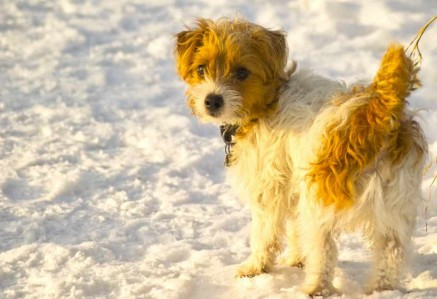 Young Sporting Lucas Terrier