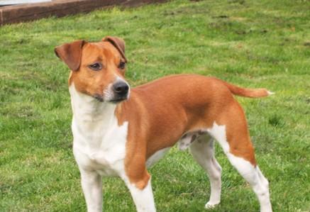 Plummer-Terrier.jpg