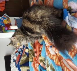 Fluffy male cat