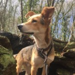 Lovely Trained Boy Seeks Forever Home