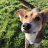 Pets  - Trained Romanian Male Needs Forever Home