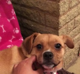 Pets  - Quiet. Patient Home Needed For 2yr Old Coco