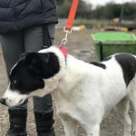 Princess. Very Affectionate 3 Yr Old Girl