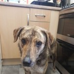 Loving Home Needed For 2yr Old Rita