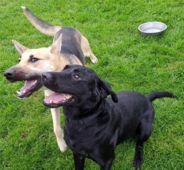 Pets  - Sally Black Labrador