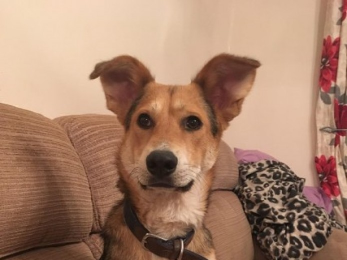 Gorgeous Boy Needs Home With Another Dog