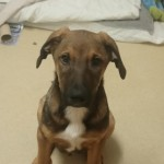 Male Crossbreed Urgent Rehome