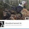 Pets  - Top Quality Nkc Reg American Bulldog Stud