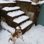 Rehoming A Beautiful Beagle
