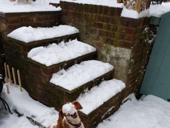 Rehoming A Beautiful Beagle