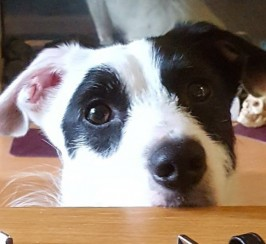 Lovely Jrt Need..s New Home