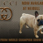 New To Neibull Is Gucci Available For Stud