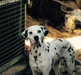 Pets  - Dalens Spotty Sensation