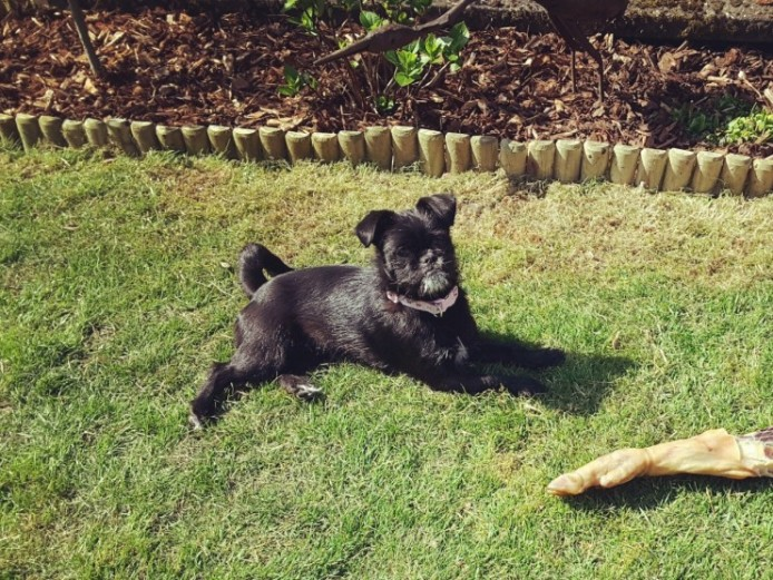 Beautiful Pug X Puppies For Sale