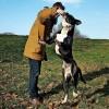 Pets  - Rbk Prince For Stud