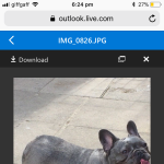 **Lovely Blue Female Frenchbulldog**