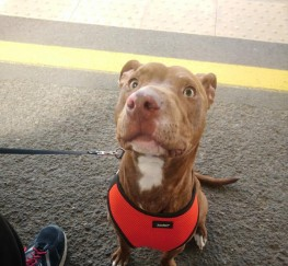 Pets  - Need a new home asap