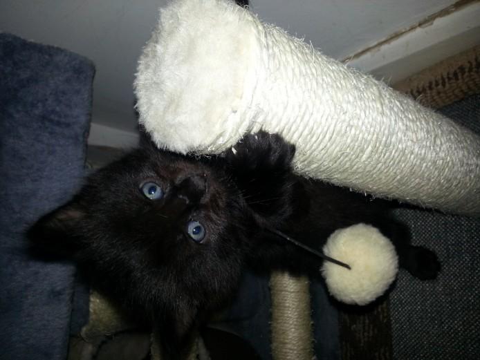 Unusual beautiful kittens