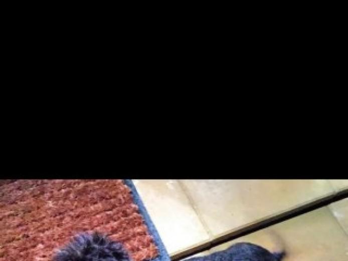 Standard Wired Haired Daschund Pups Kc Reg