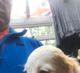 Fantastic Clumber X English Springer Spaniel  Pups