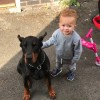 Pets  - Beautiful Dobermann For Sale