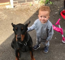 Beautiful Dobermann For Sale