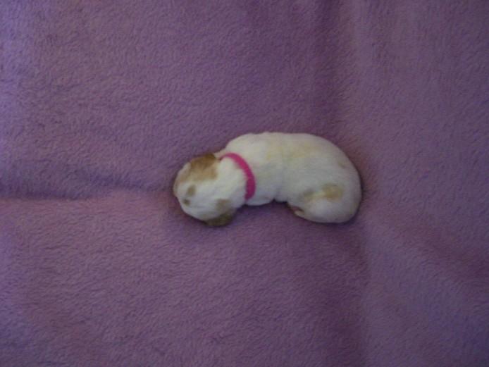 Top Quality Litter KC Reg Puppies