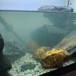 3 turtles for sale