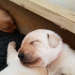 Gorgeous Puppies For Sale