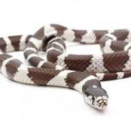 female snake and set up