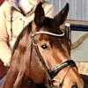 Pets for Sale - Hanoverian mare is looking for a new loving home