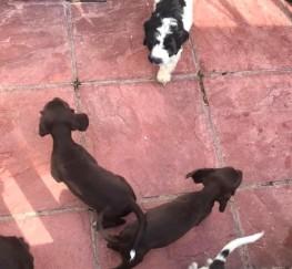 Pets  - Puppies