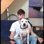 Loving male Staffordshire bull terrier