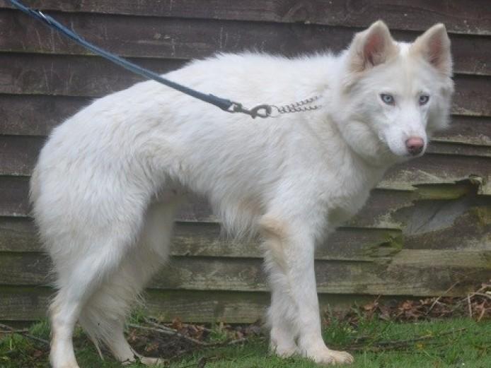Allsorts Dog Rescue