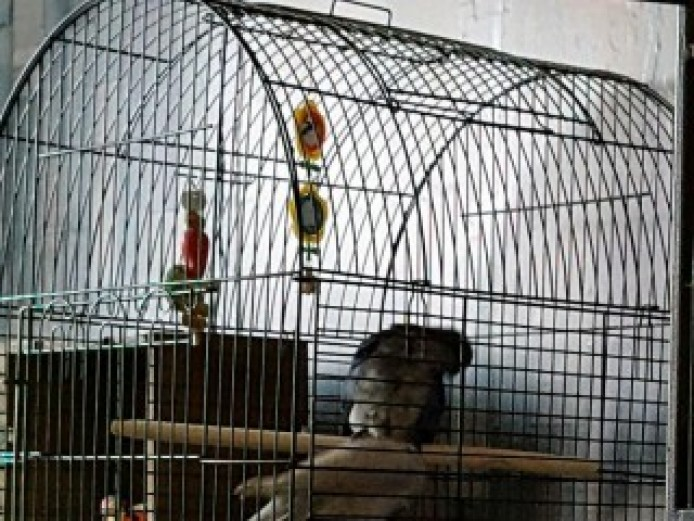 Mixture Of Birds For Sale With Large Cage.