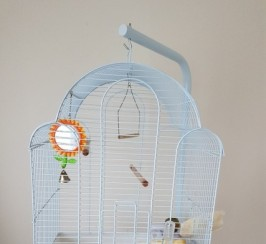 Pair Of Canaries Male And Female Cage Stand Etc