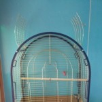 Large Open Top Bird Parakeet Parrot Cage