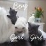 Beautiful Kittens Available