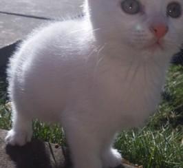 Stunning Kittens For Sale