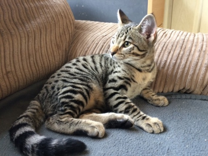 Special Family Pet F5 Boy Or Potential Stud